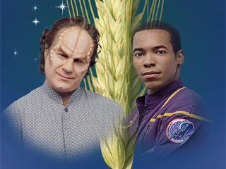 'Amère récolte' (106)
